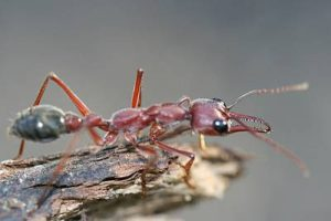 Melbourne VIC leading pest control company is RIP Termite & Pest Control.